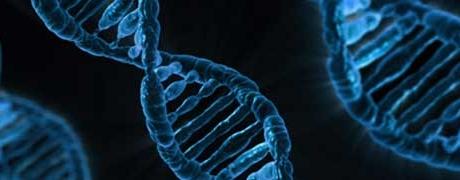 Symposium: Dochters van EVA. Wat (mt)DNA allemaal over uw afkomst kan vertellen